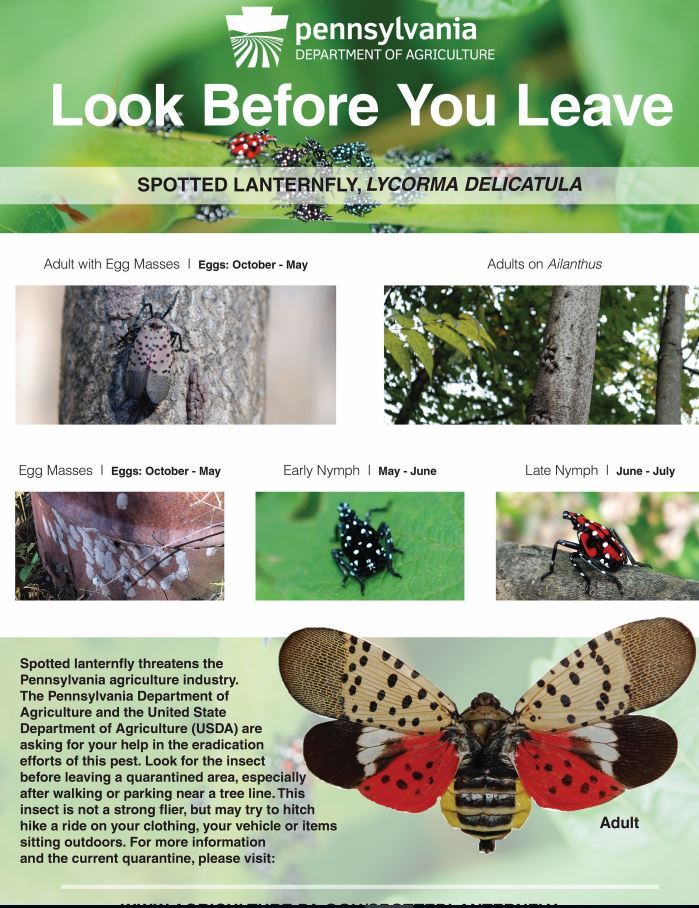 PA Dept. of Agriculture warning poster regarding checking for all stages of Spotted Lanternfly